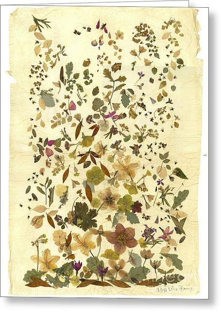 Pressed Flowers Greeting Cards - Victoriana autumn Greeting Card by Kaye Miller-Dewing