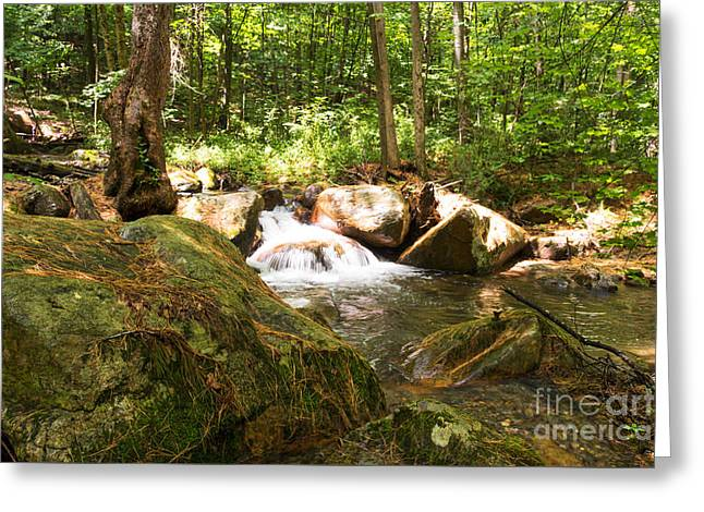 Moss Greeting Cards - View from a Green Forest Greeting Card by DAC Photography