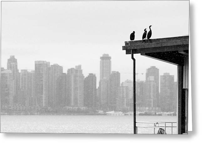 View From Londsdale Quay Greeting Card by Barbara  White