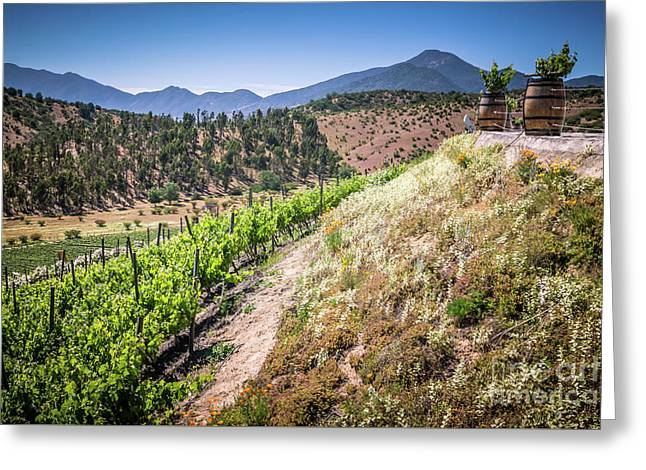 View Of The Vineyard. Winery In Casablanca, Chile. Greeting Card by Anna Soelberg