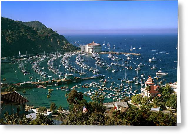 Casino Pier Greeting Cards - View of Avalon Harbor Greeting Card by Cliff Wassmann