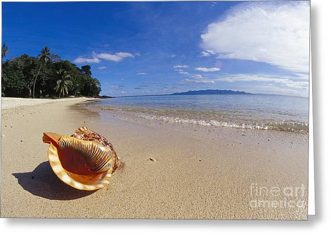Aquatic Greeting Cards - View Of Fiji Greeting Card by Dave Fleetham - Printscapes