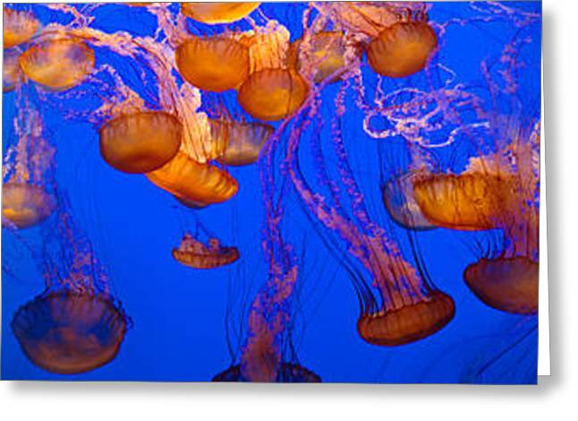 Jelly Fish Greeting Cards - View Of Jelly Fish Underwater Greeting Card by Panoramic Images