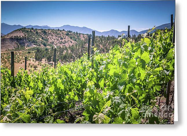 View Of The Vineyard. Winery In Chile, Casablanca Valley Greeting Card by Anna Soelberg