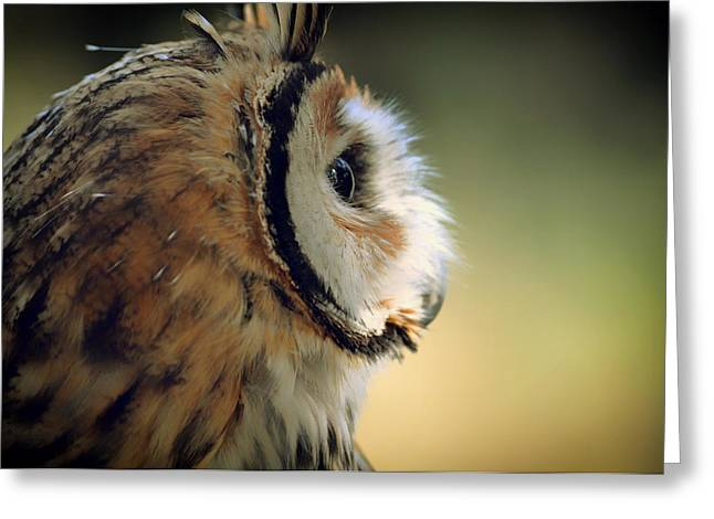 Lovely Owl Greeting Cards - Vigilant  Greeting Card by Javier Palmieri
