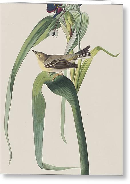 Vigor's Warbler Greeting Card by John James Audubon