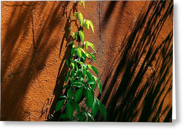 Contrast Greeting Card by Brian Manfra