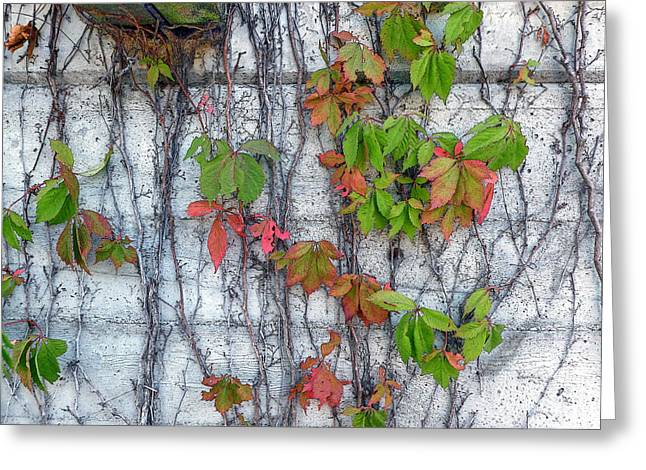The Houses Greeting Cards - Vine Greeting Card by Edward  Sevier