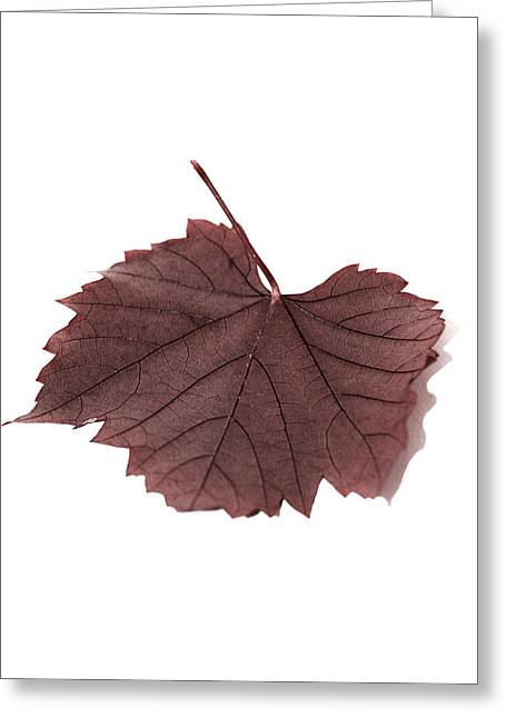 Wine Growing Illustrations Greeting Cards - Vine Leaf Greeting Card by Claire Hull