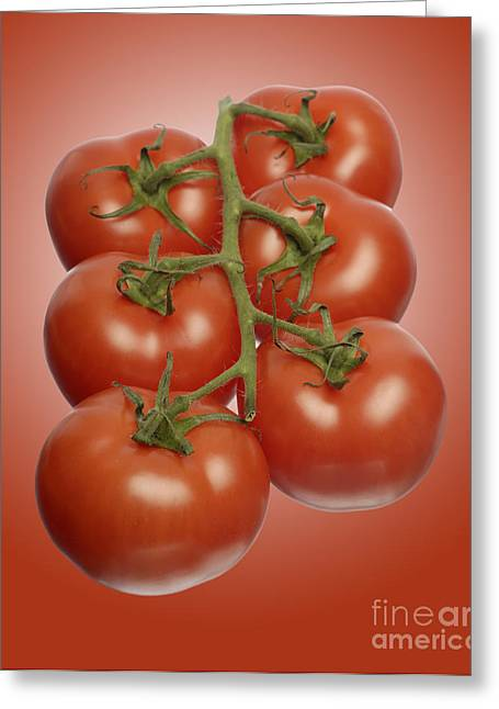 Cut-outs Greeting Cards - Vine Tomatoes Greeting Card by John Boud
