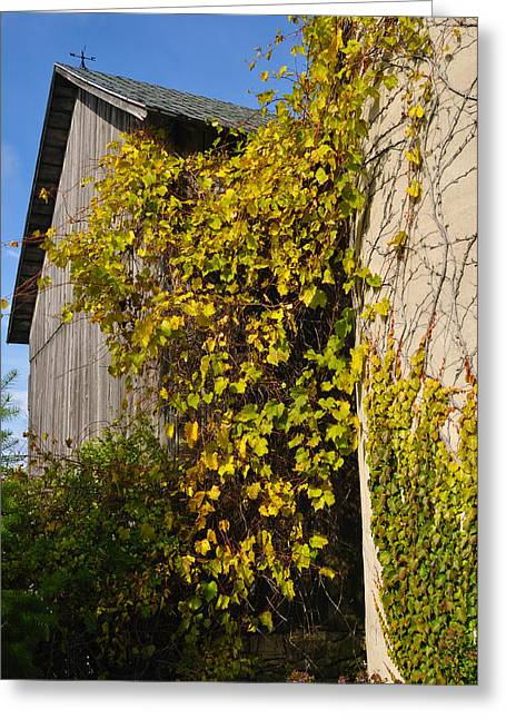 Vine Leaves Greeting Cards - Vined Silo Greeting Card by Tim Nyberg