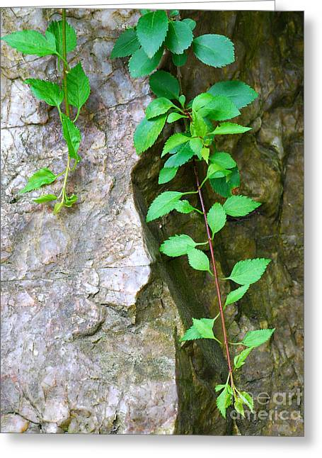 Vine Leaves Pyrography Greeting Cards - Vines and Rocks Greeting Card by Nancy Mueller