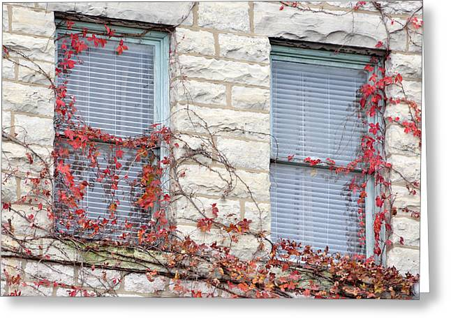 Architectural Landscape Greeting Cards - Vines in Fall Greeting Card by Jan Amiss Photography