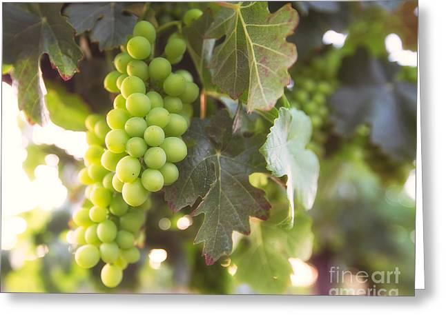 Grape Vineyard Greeting Cards - Vineyard 1 Greeting Card by Anthony Michael Bonafede