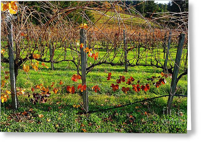 Grapevine Photographs Greeting Cards - Vineyard 14 Greeting Card by Xueling Zou