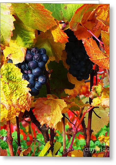 Grapevines Greeting Cards - Vineyard 18 Greeting Card by Xueling Zou