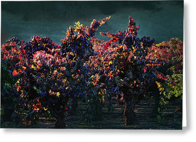 Northern California Vineyards Greeting Cards - Vineyard 39 Greeting Card by Xueling Zou