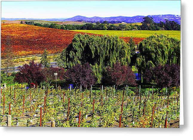 Blue Grapes Photographs Greeting Cards - Vineyard 5 Greeting Card by Xueling Zou