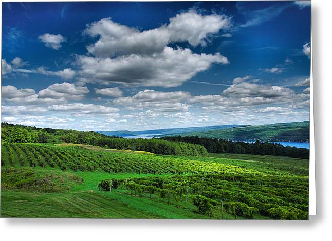 Canvas Wine Prints Greeting Cards - Vineyard And Lake Greeting Card by Steven Ainsworth