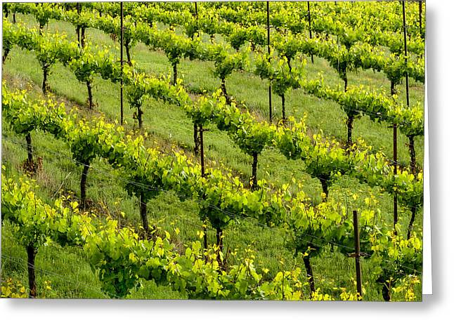 Winery Photography Greeting Cards - Vineyard Art Pattern #1 Greeting Card by Kerry Drager