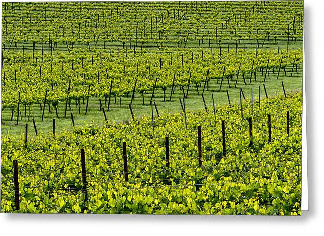 Winery Photography Greeting Cards - Vineyard Art Pattern #2 Greeting Card by Kerry Drager