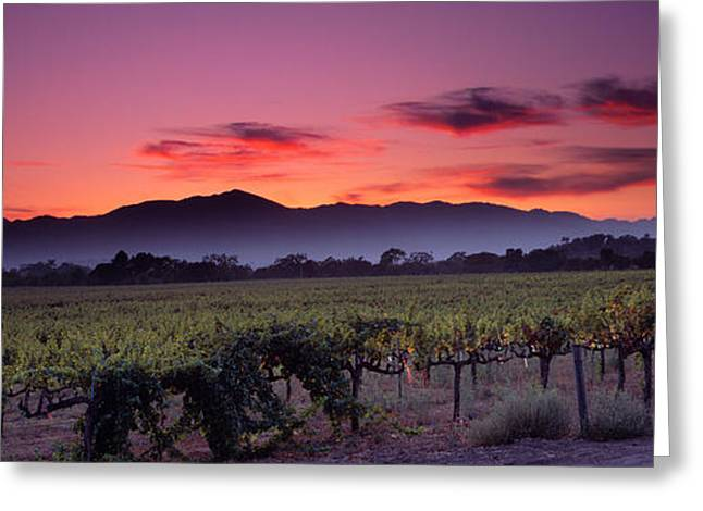 Vineyard At Sunset, Napa Valley Greeting Card by Panoramic Images