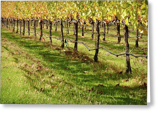 Grapevine Autumn Leaf Greeting Cards - Vineyard Greeting Card by Brandon Bourdages