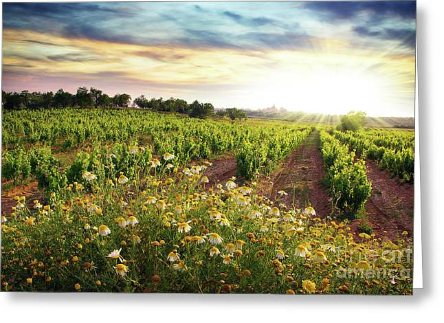 Grapevine Photographs Greeting Cards - Vineyard Greeting Card by Carlos Caetano