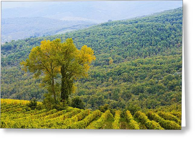 Radda In Chianti Greeting Cards - Vineyard  Chianti, Tuscany, Italy Greeting Card by Yves Marcoux