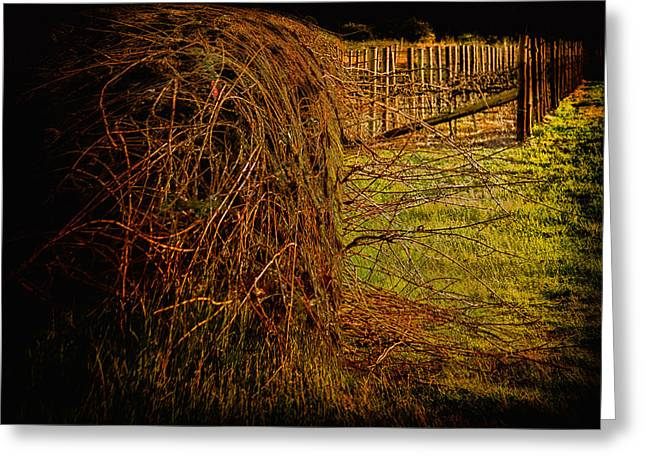 Consume Digital Greeting Cards - Vineyard consumes Greeting Card by John Monteath