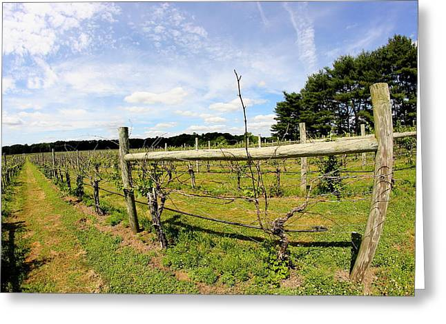 Vines Greeting Cards - Vineyard Fence Greeting Card by Brian Manfra