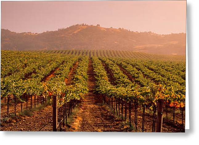 Grapevine Greeting Cards - Vineyard Geyserville Ca Usa Greeting Card by Panoramic Images