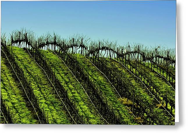 Vineyard In Autumn Greeting Card by Fernando Lopez Lago
