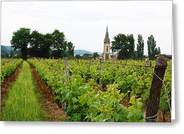 Vineyard In France Greeting Card by Marion McCristall