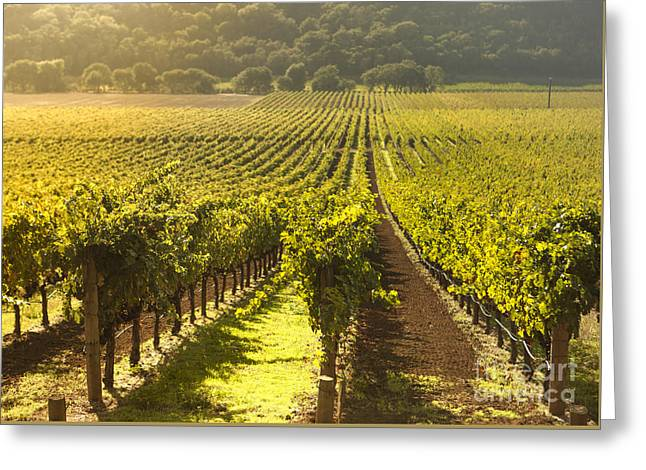 Vineyard In Napa Valley Greeting Card by Diane Diederich