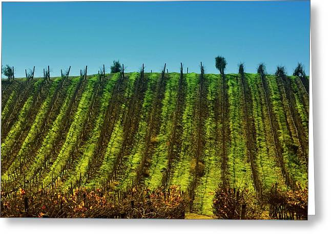 Vineyard In Tapihue 2 Greeting Card by Fernando Lopez Lago
