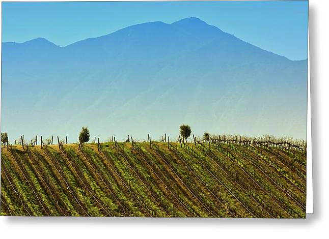 Vineyard In Tapihue Greeting Card by Fernando Lopez Lago