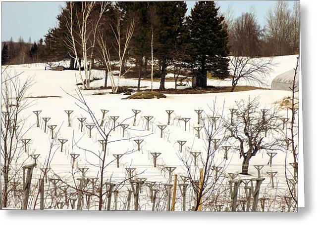 Maine Agriculture Greeting Cards - Vineyard in the North Greeting Card by William Tasker