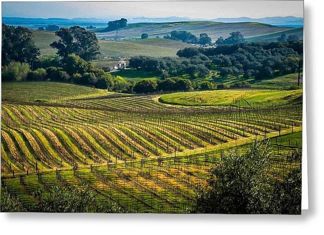 Grape Vineyard Greeting Cards - Vineyard Landscape 1 Greeting Card by Mark Beecher