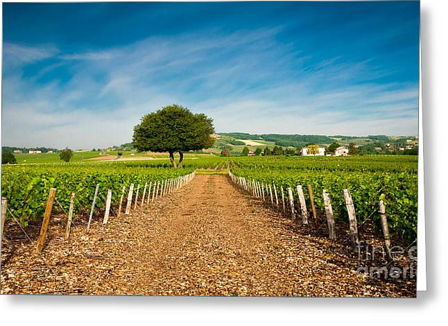 Gamay Photographs Greeting Cards - Vineyard of Frontenas village Greeting Card by Gael Fontaine