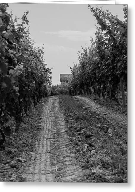 Grape Vineyard Greeting Cards - vineyard of old BW Greeting Card by Photographic Arts And Design Studio