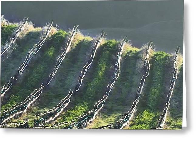 Grape Vineyard Greeting Cards - Vineyard Ridge Greeting Card by Josephine Buschman