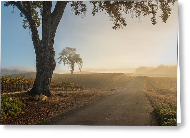 Vineyard Road Greeting Card by Joseph Smith