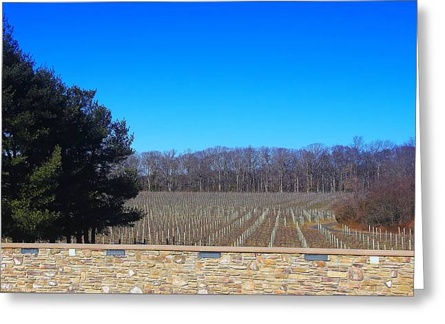 Grapes Greeting Cards - Vineyard View Greeting Card by Brian Manfra