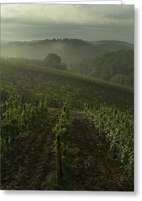 Chianti Greeting Cards - Vineyards Along The Chianti Hillside Greeting Card by Todd Gipstein