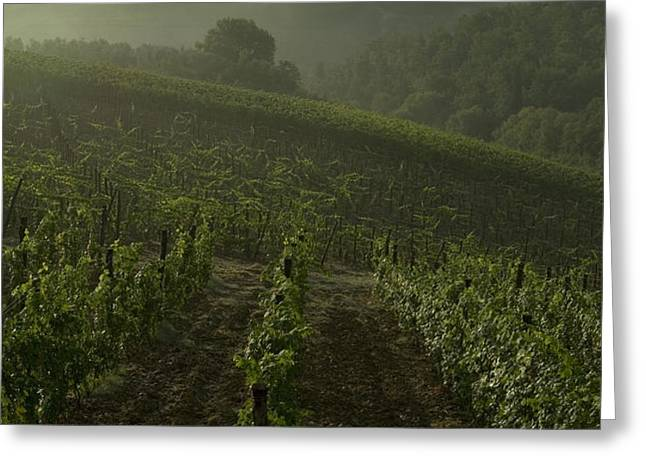 Vineyards Along The Chianti Hillside Greeting Card by Todd Gipstein