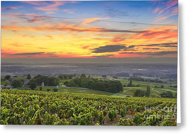 Gamay Photographs Greeting Cards - Vineyards and sunrise at Beaujolais land Greeting Card by Gael Fontaine