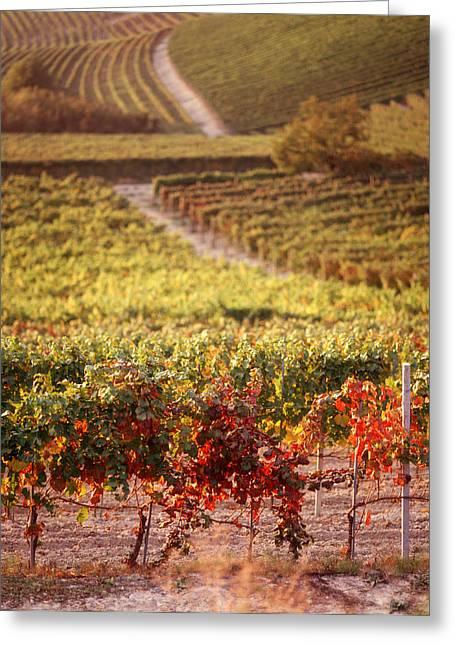 Vineyard Landscape Greeting Cards - Vineyards, Barbaresco Docg, Piedmont Greeting Card by Panoramic Images