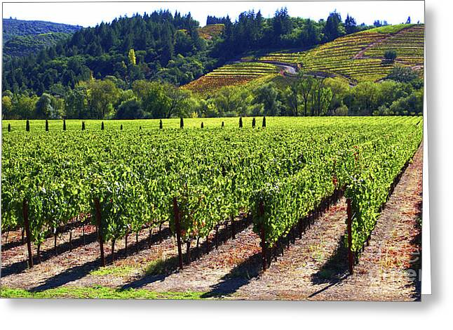 Sonoma County Vineyards. Greeting Cards - Vineyards in Sonoma County Greeting Card by Charlene Mitchell