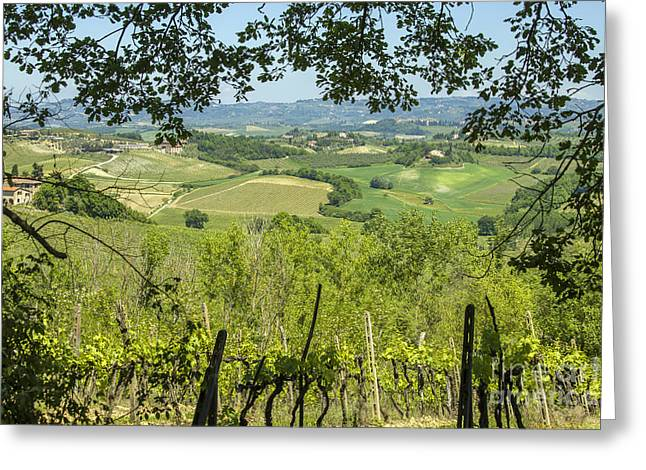 Tuscan Sunset Greeting Cards - Vineyards in Tuscany landscape Greeting Card by Patricia Hofmeester